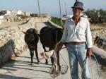 La vie quotidienne à Folegandros