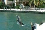 Les dauphins de la marina en vidéos