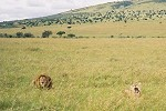 Safari du 2ième jour