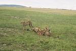 Safari du 4ième jour