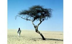 L'arbre du Ténéré, symbole de la survie dans le Sahara