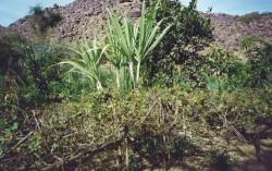 L'oasis de Timia