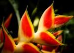 La flore de Martinique
