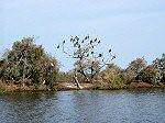 Le parc national des oiseaux du Djoudj