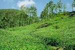 Réserve forestière de Sinharaja