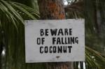 Attention chute de noix de coco