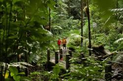 La forêt tropicale d'El Yunque