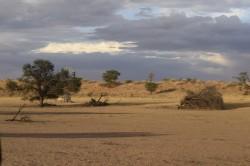 Paysage du Kgalagadi