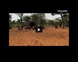 Les bushmens d'Afrique Australe