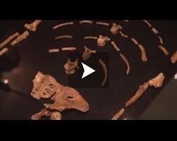 Le Musée national d'Ethiopie fête les 40 ans du squelette Lucy