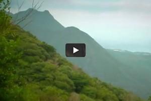 Yakushima, l'île aux cèdres millénaires