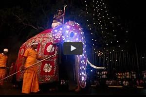 Défilé d'éléphants pour la fête de Perahera à Kandy