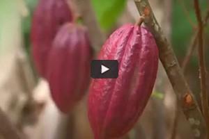 Cacao et café, les saveurs d'exception du Pérou